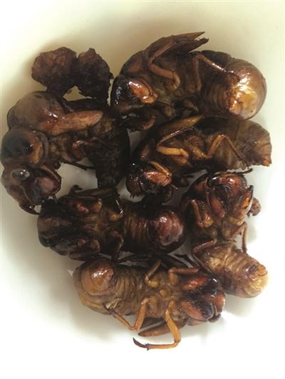 2ch:蝉的幼虫在中国成为人气食材,捕蝉人可月入万元